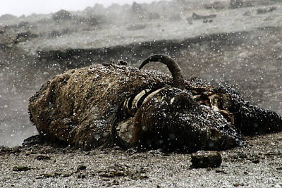 Photograph - Dead Bison Yellowstone National Park by Benjamin Dahl