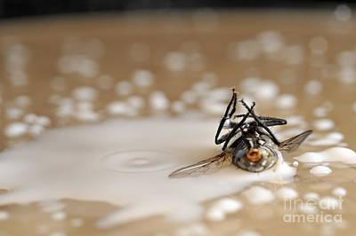 Dead Fly On Milk Drops Art Print by Sami Sarkis