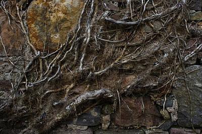 Photograph - Dead Ivy by Joe Macrae