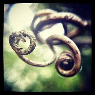Macro Photograph - Dead Spirals by Dave Edens