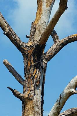 Photograph - Dead Tree - Blue Sky by Lynda Dawson-Youngclaus