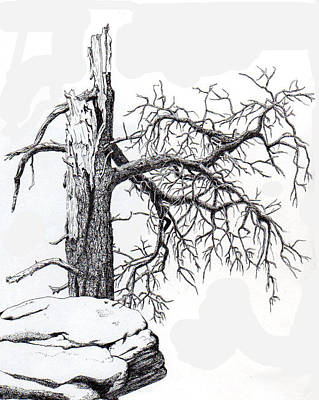 Drawing - Dead Tree by Inger Hutton