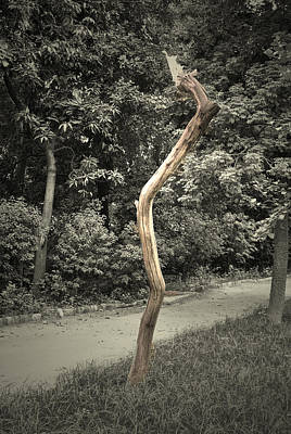 Print Photograph - Dead Tree by Sumit Mehndiratta