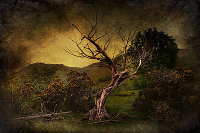 Bare Trees Digital Art - Dead Tree by Svetlana Sewell