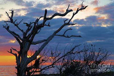 Photograph - Dead Trees At Sunrise by Adam Jewell