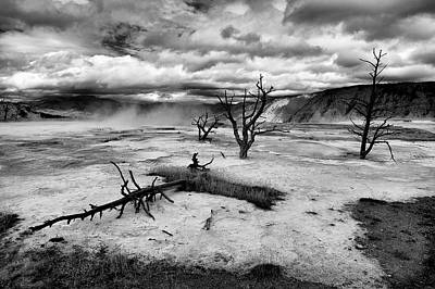 Mammoth Terrace Photograph - Dead Trees by Guido Tramontano Guerritore