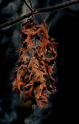 Slip Away Photograph - Death Of A Leaf by D L McDowell-Hiss