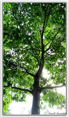 Deciduous Tree 2 Art Print