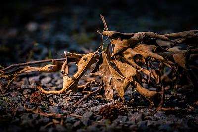 Photograph - Deciduousness by Gene Hilton