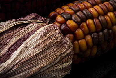 Photograph - Decorative Maize by Clare Bambers