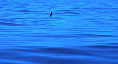 Photograph - Deep Blue Sea by Odille Esmonde-Morgan