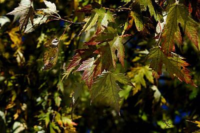Fall Photograph - Deep Fall  by Kelly Rader