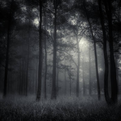 Photograph - Deep Forest by Jaromir Hron