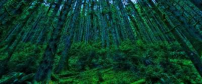 Photograph - Deep Forest by Thomas Born