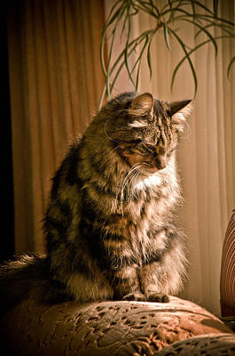 Photograph - Deep In Kitty Thought by Trish Tritz