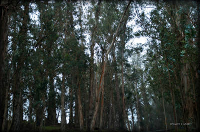 Photograph - Deep Inside The Forest by Paulette B Wright