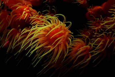 Deep Ocean Coral Polyp Art Print