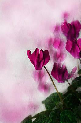 Deep Pink Cyclamen Art Print by Jacqi Elmslie