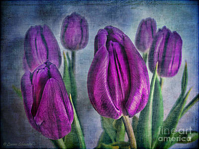 Tulips Digital Art - Deep Purple by Lianne Schneider