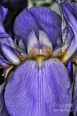 Purple Sensation Photograph - Deep Purple by Paul Ward