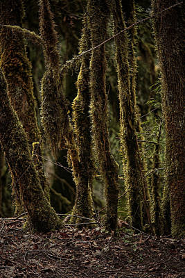 Forest Floor Photograph - Deep Woods by Bonnie Bruno