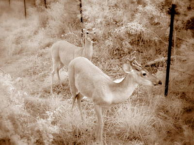 Photograph - Deer 6 In Sepia by James Granberry