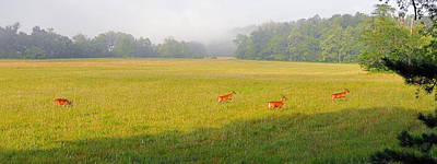 Photograph - Deer Across Cades Cove by Alan Lenk