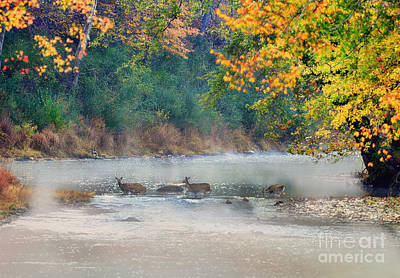 Photograph - Deer Crossing River by Dan Friend
