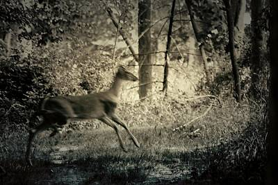 Photograph - Deer Crossing by Scott Hovind