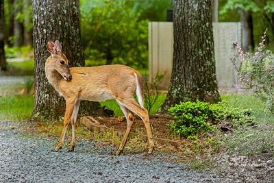 Photograph - Deer by Gene Hilton