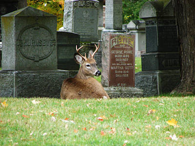 Deer In Cemetery Art Print