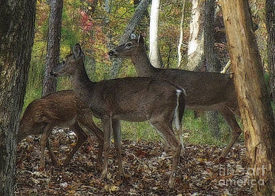 Art Print featuring the photograph Deer In Forest by Lydia Holly