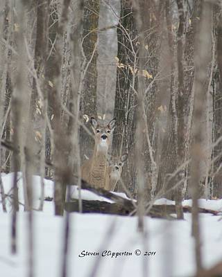Art Print featuring the photograph Deer In Woods by Steven Clipperton
