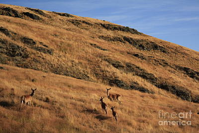 Deer On Mountain 3 Art Print by Pixel  Chimp