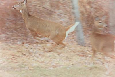 Deer On The Run Art Print by Karol Livote