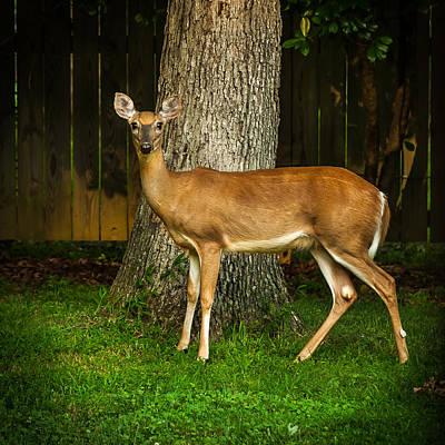 Photograph - Deer One Iv by Gene Hilton