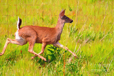 Deer Prancing In The Field Art Print by Wingsdomain Art and Photography