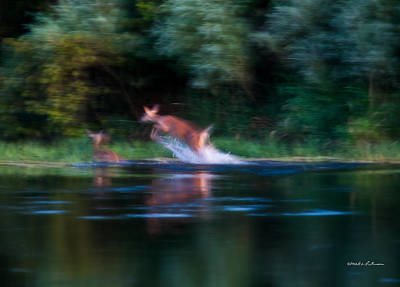 Photograph - Deer Splash by Edward Peterson