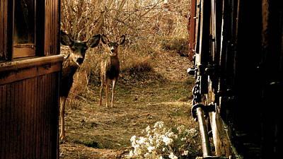 Deer Train Yard In Golden Art Print by Travis Burns