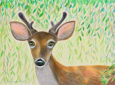 Photograph - Deer Visitor Under The Willow Tree by Jeanne Kay Juhos
