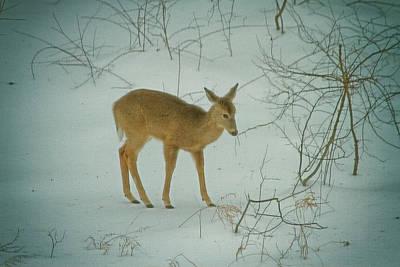 Deer Winter Art Print by Karol Livote