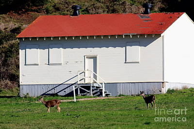 Deers At The Old Presidio In The Bay Area Marin Headlands . 40d4237 Art Print