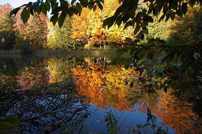 Reflection Photograph - Deers Eye View by LeeAnn McLaneGoetz McLaneGoetzStudioLLCcom