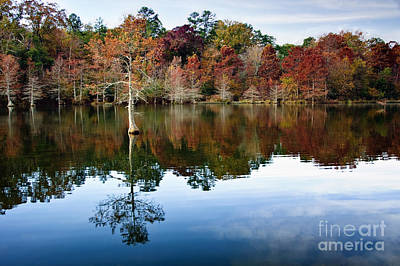 Photograph - Beaver's Bend Defiant Cypress by Tamyra Ayles