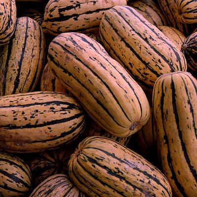 Peanut Photograph - Delicata Squash by LeeAnn McLaneGoetz McLaneGoetzStudioLLCcom