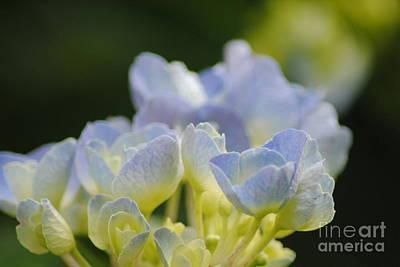Delicate Bloom Art Print