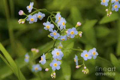 Pennypack Photograph - Delicate Blue by Edward Spector