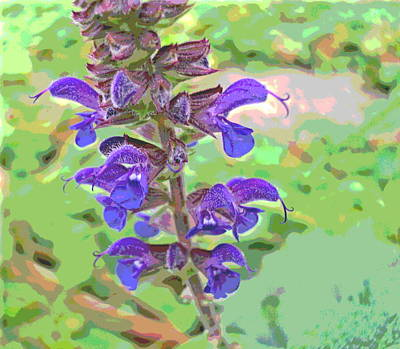 Impressionist Style Photograph - Delicate Blue Flowers by Padre Art