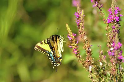 Pollinate Digital Art - Delicate Butterfly by Bill Cannon