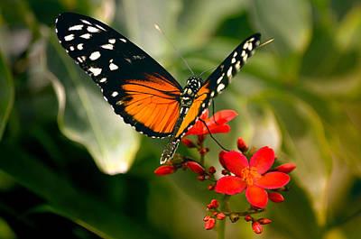Photograph - Delicate Monarch by Julie Palencia